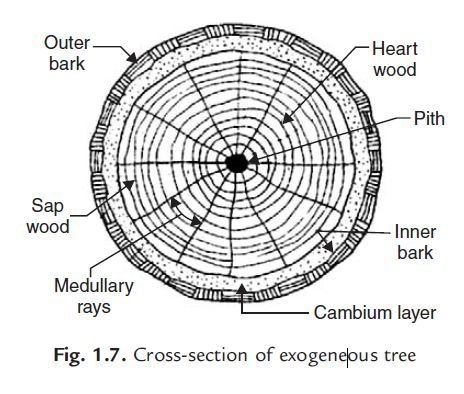 Photo of Classification of Timber